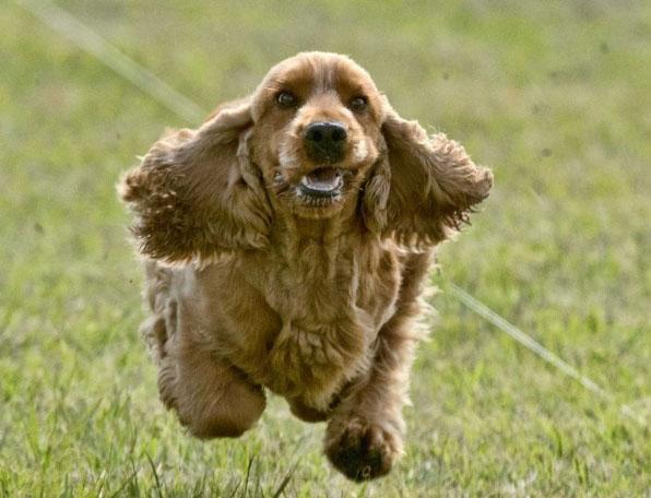 Chasing Dog